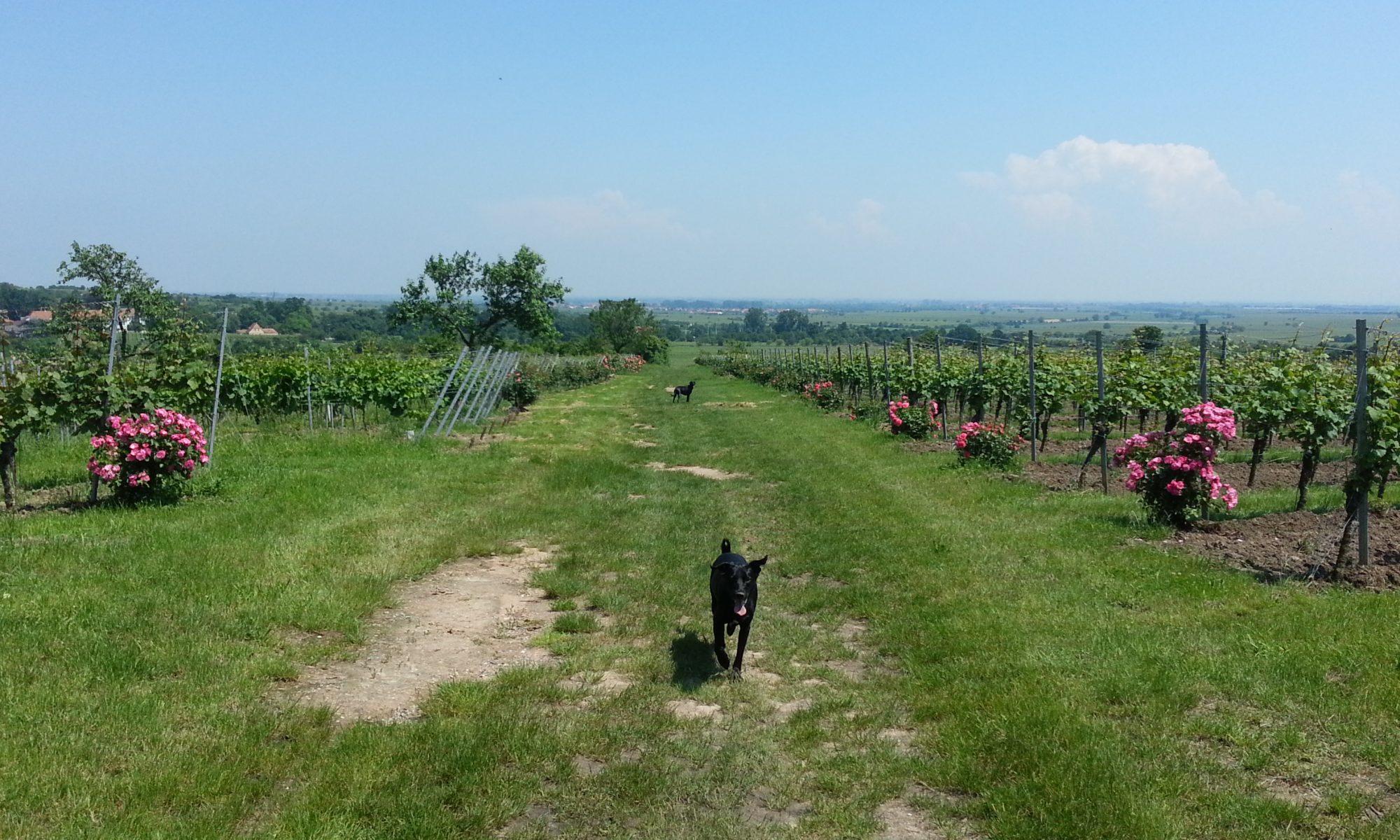 Das Bio Kauholz aus der Pfalz